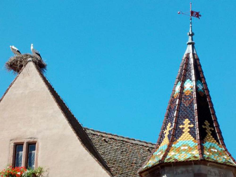 Alsace-1000-web-Eguisheim-roof-with-storks_2