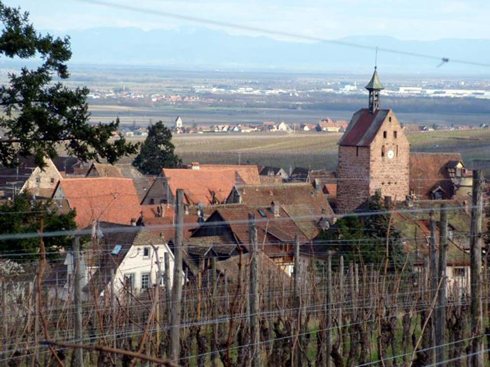 Alsace-1000-web-Riquewhir-from-the-wineyards