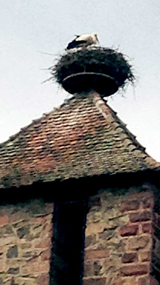 Alsace Joelle-Aubry---IMG_2101-1000-web